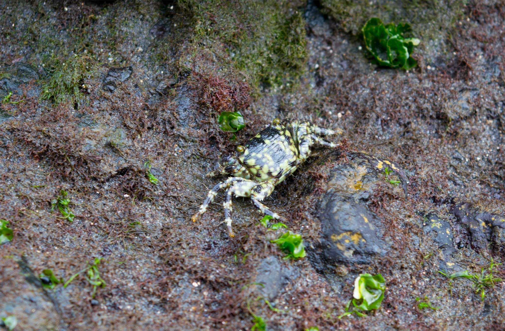 Off the path - The Pura Tanah Lot Bali - Crab Colony - Travel Blog - Scew Them All