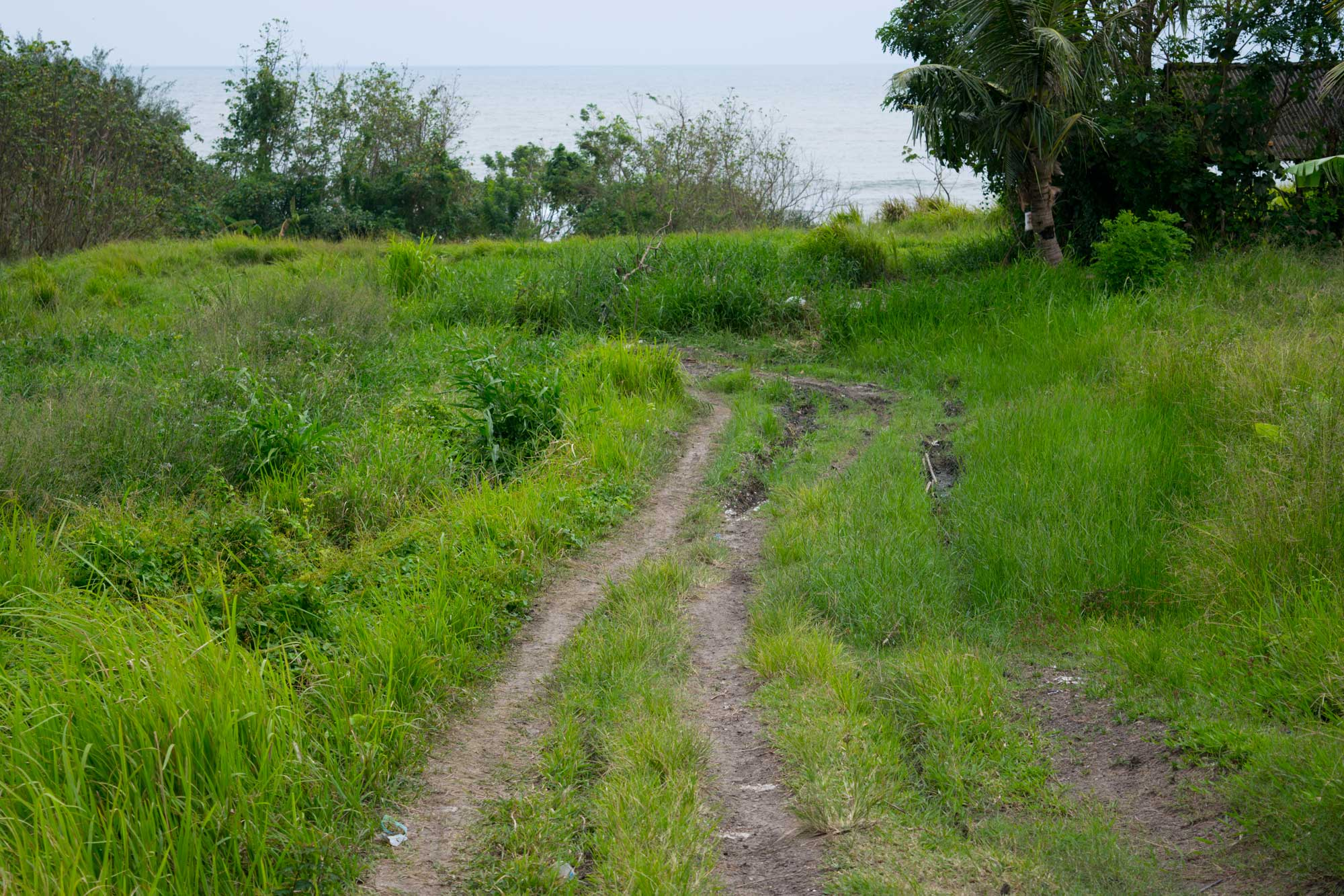 Off the path - Travel blog Bali - Screw Them All